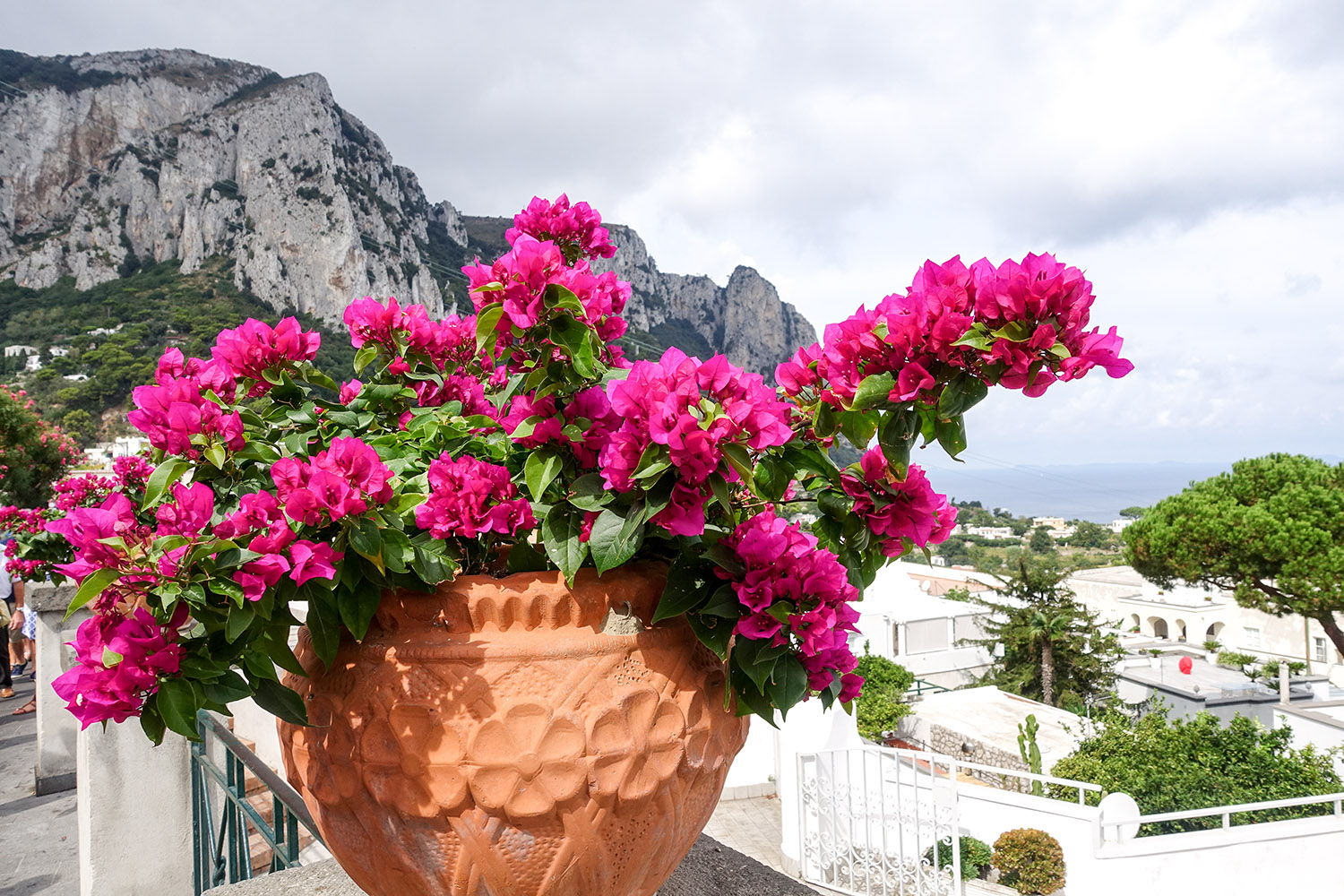 bouganvillea-capri-italy on my mind